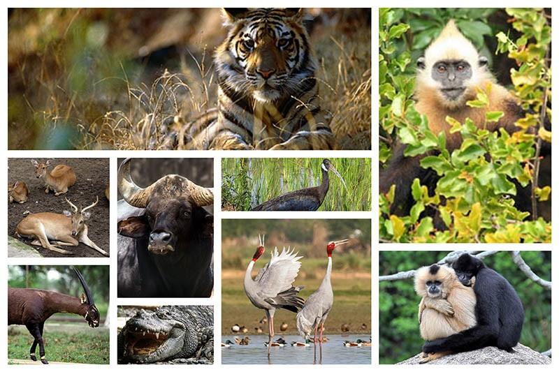 endangered-species-in-vietnam