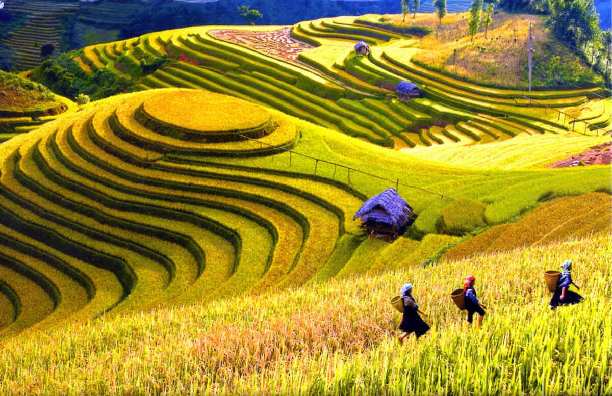 What to do in Sapa Travel Guide | i Tour Vietnam Blogs