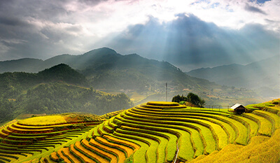 expat tours in vietnam sapa staircase paddy fields