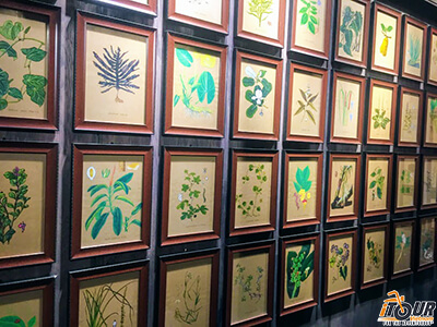 The Fito Museum of Traditional Medicine in Ho Chi Minh City